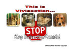Stop Vivisection Canada!